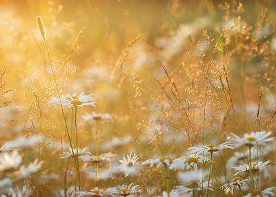 Flora/Taimed