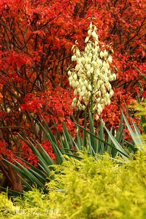 Autumn in Washington DC - 2009