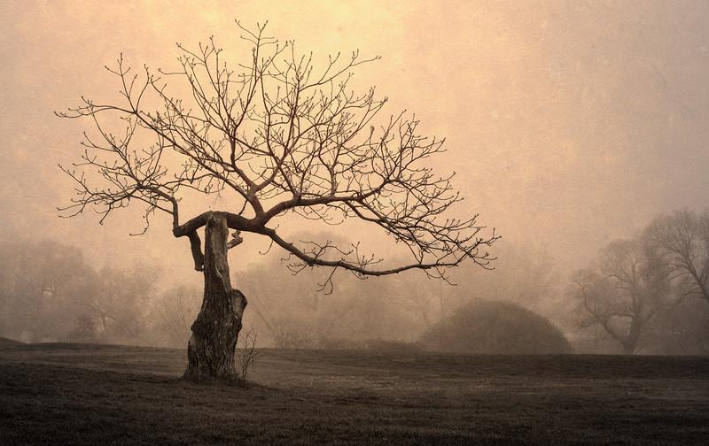 trees in fog-b&w-testure_May 2-2012_06.jpg