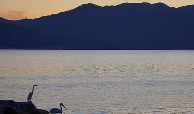 Birding at the Salton Sea