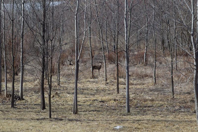 LuLu Doesn't Like the DeerFebruary 03, 20141.jpg