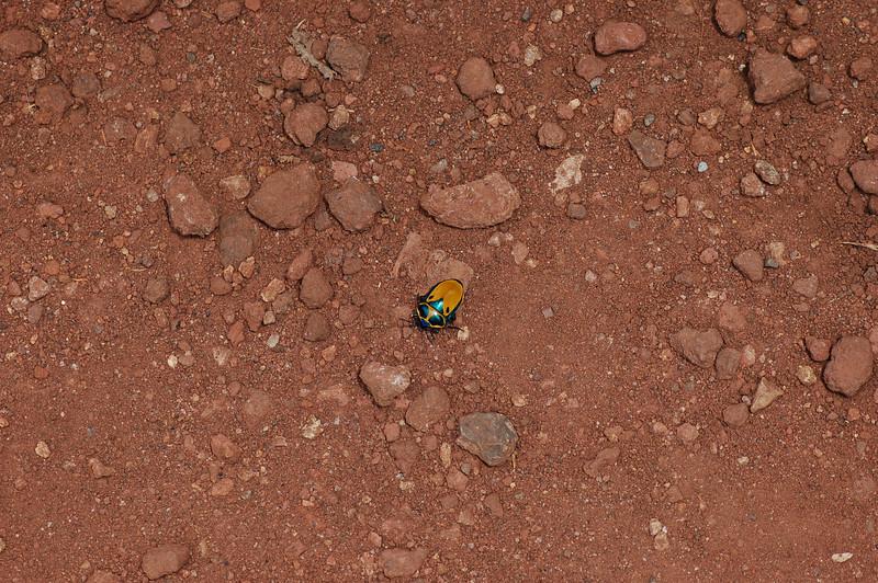 funky beetle.JPG