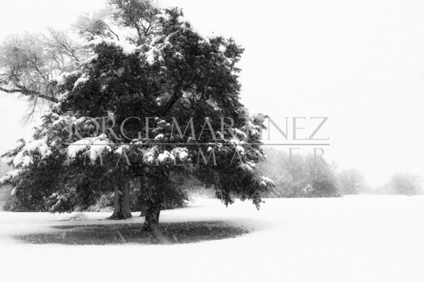 NORTH TEXAS SNOW