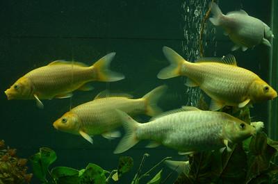 Aquarium - Rock Garden