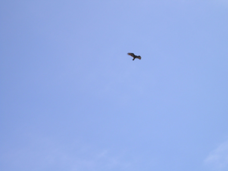 We were alone and walked, and watched a hawk making lazy circles in the sky. (Oooooooook-lahoma--)