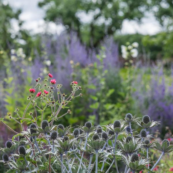 Hob Green garden-4.jpg