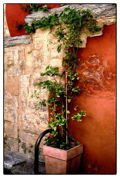 huneysuckle vine.jpg