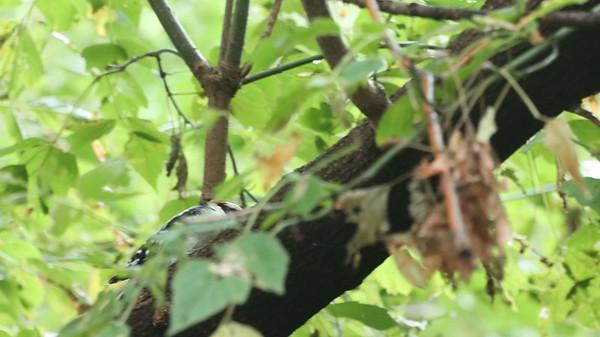 6 Sept 2021 Falaise Birds