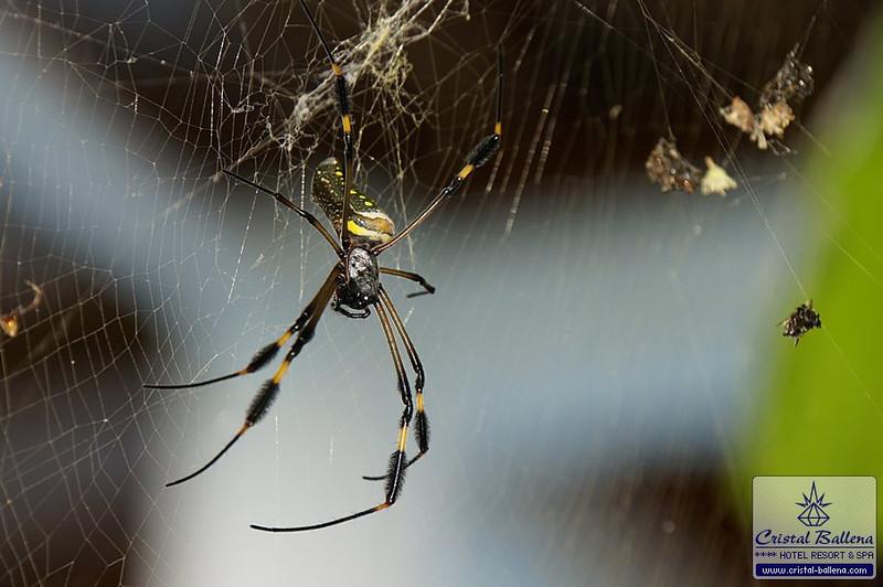 Nature-spider1_0600px-wm.jpg