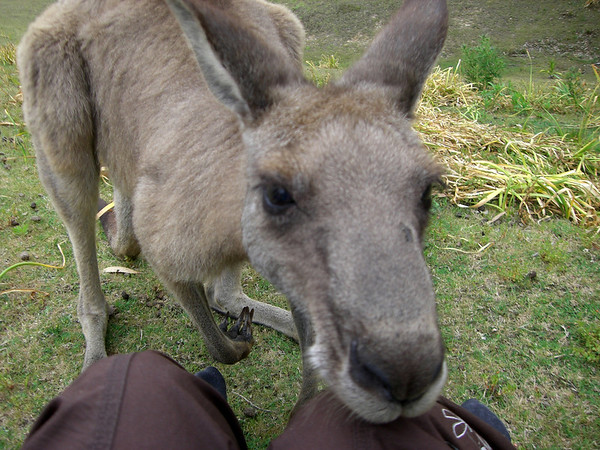 Bateman's Bay and Kangaroos!