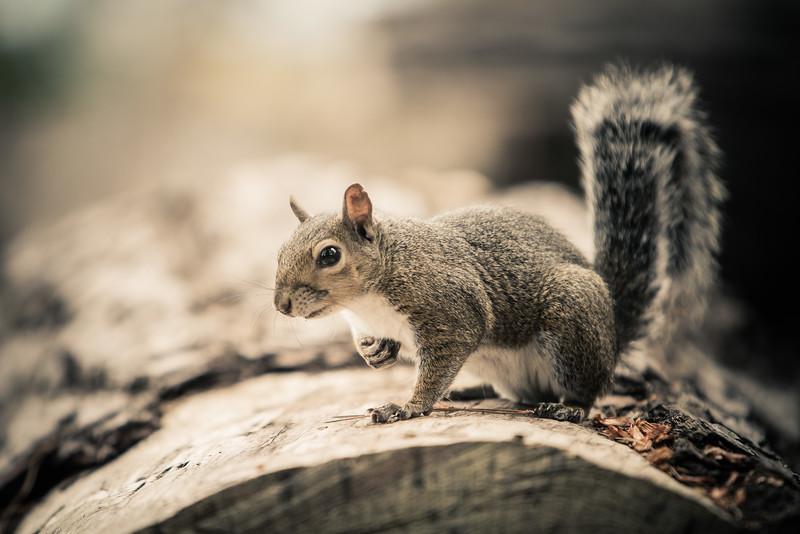 Squirrel-Sunday-2.jpg