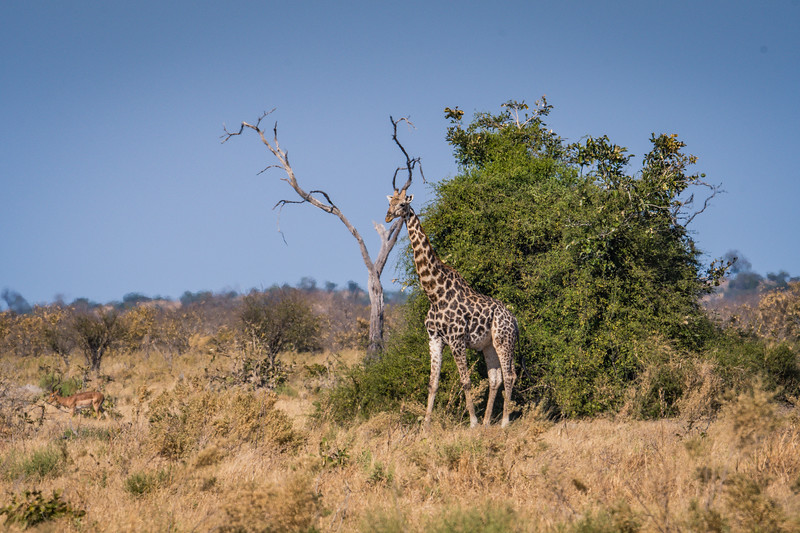 Botswana_June_2017 (5117 of 6179).jpg