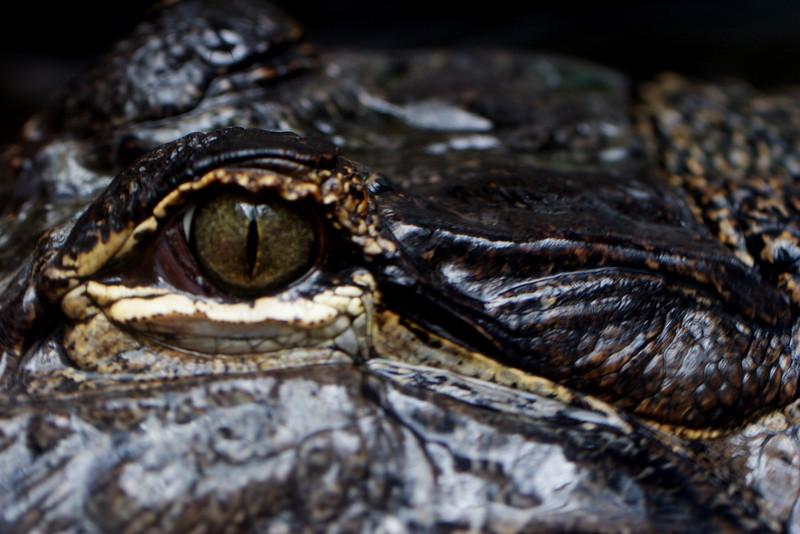 Gator_0004.jpg