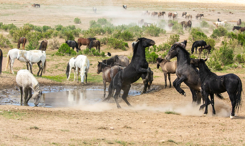 horse 11.jpg