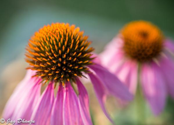 Flora Part1