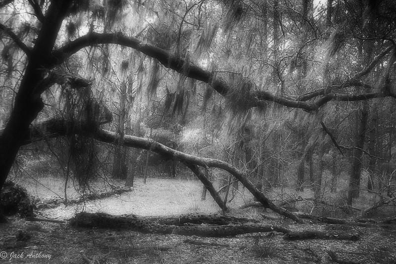 20090202-12 tree bxw.jpg