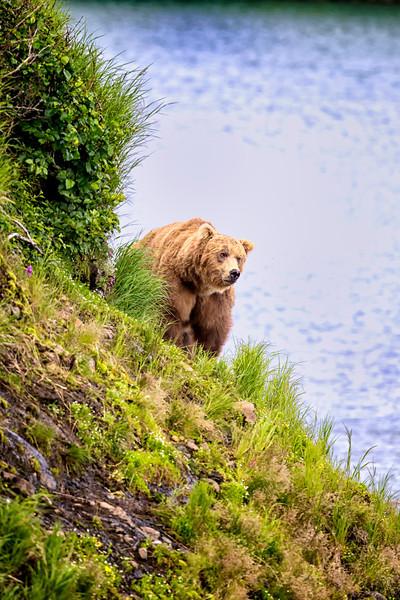 Alaska_2013_FH0T5281.jpg