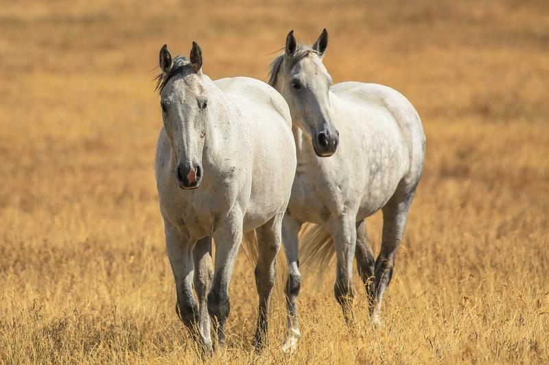 Lyn's ponies 2.jpg