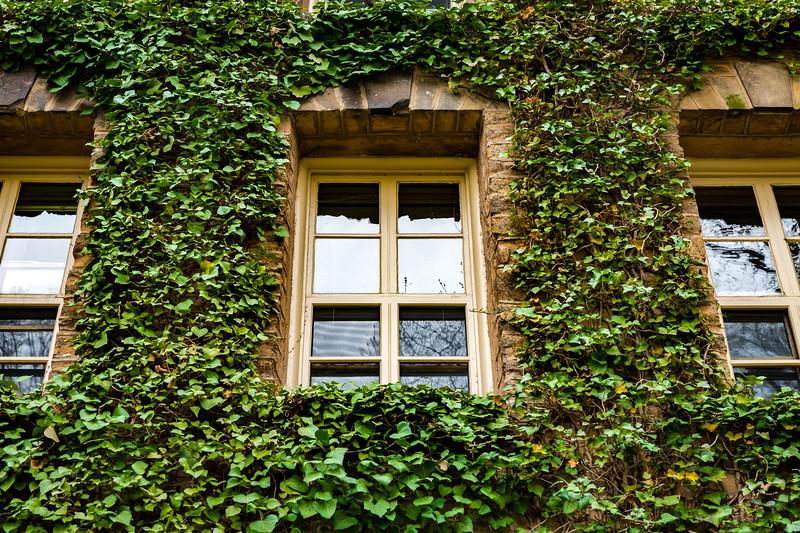 Princeton Ivy added 5-25-2017-4539.jpg