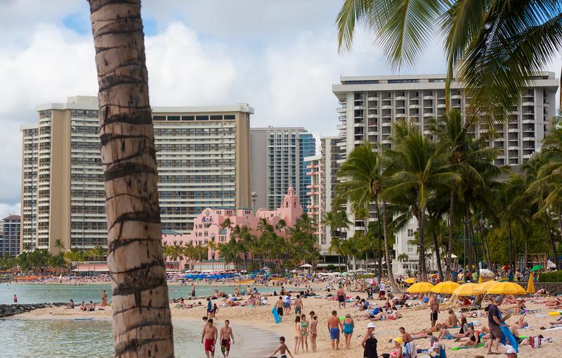 Hawaii bird-8738.jpg