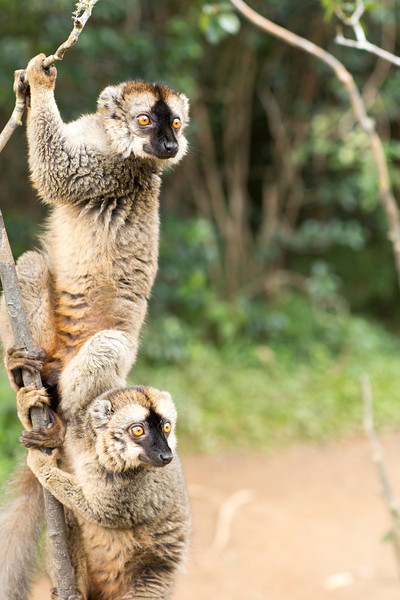 Madagascar_2013_IG3A2427.jpg