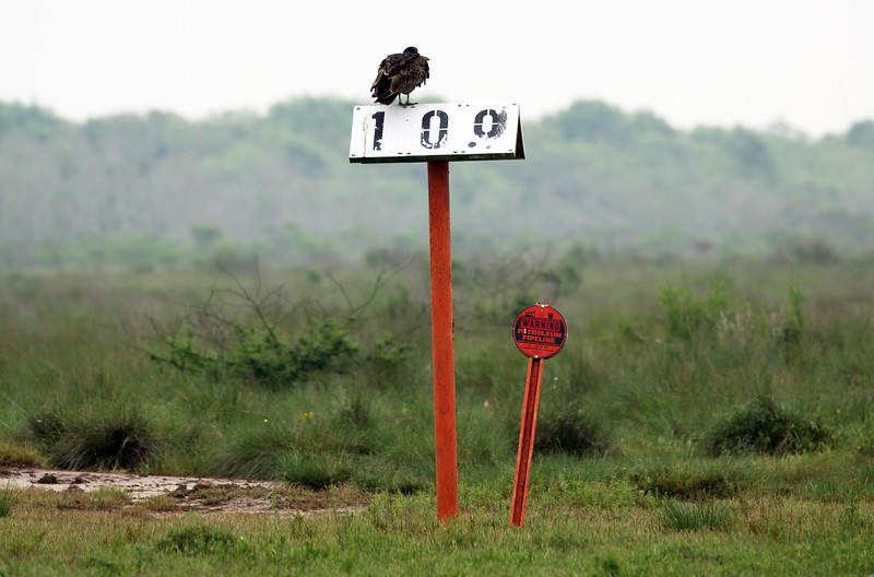 This Black Vulture calls our attention to a Warning sign.