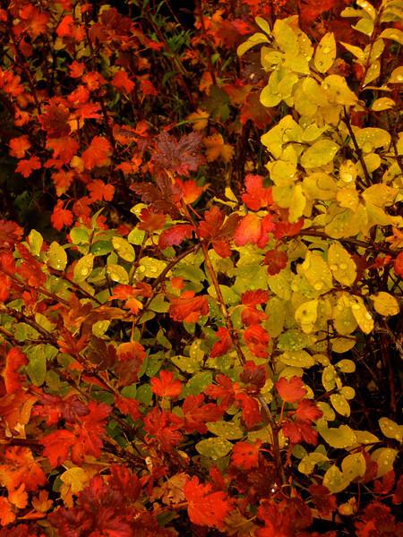 Durango Fall 2008 51