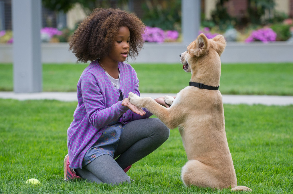 """. This image released by Columbis Pictures shows Quvenzhane Wallis in a scene from \""""Annie.\"""" Wallis was nominated for a Golden Globe for best actress in a comedy or musical for her role in the film on Thursday, Dec. 11, 2014. The 72nd annual Golden Globe awards will air on NBC on Sunday, Jan. 11. (AP Photo/Columbia Pictures - Sony, Barry Wetcher)"""