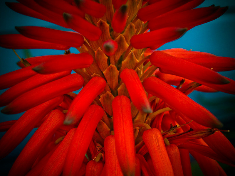 dec9-flower.jpg