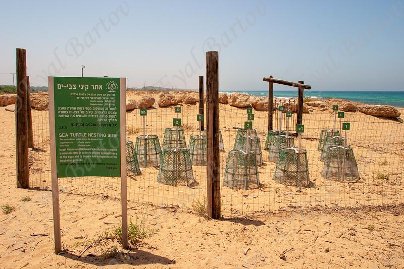 Sea Turtle nasting site