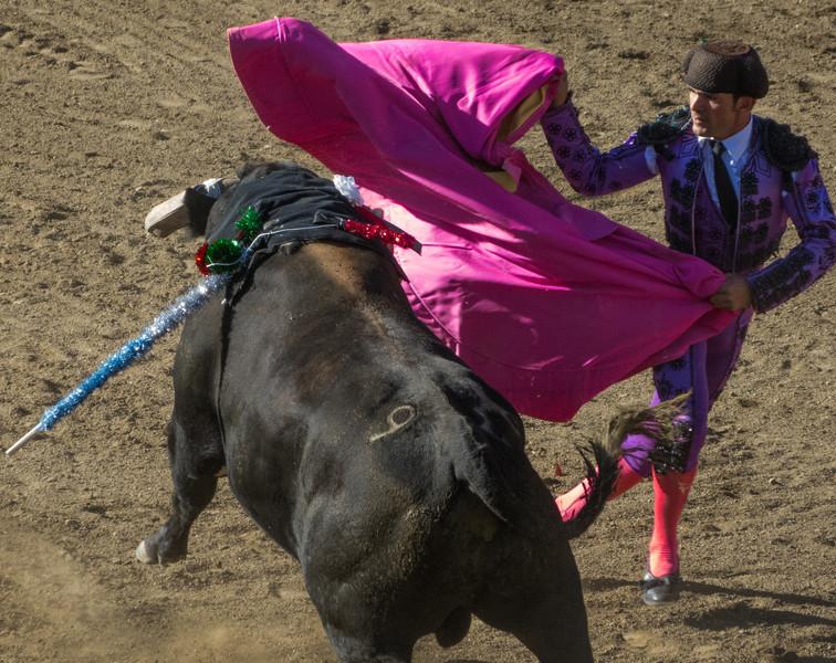 A matadore distracts the bull momentarily.