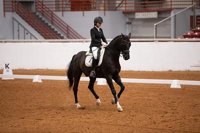 Horse 132