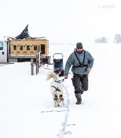 Dog Sledding (Idaho)