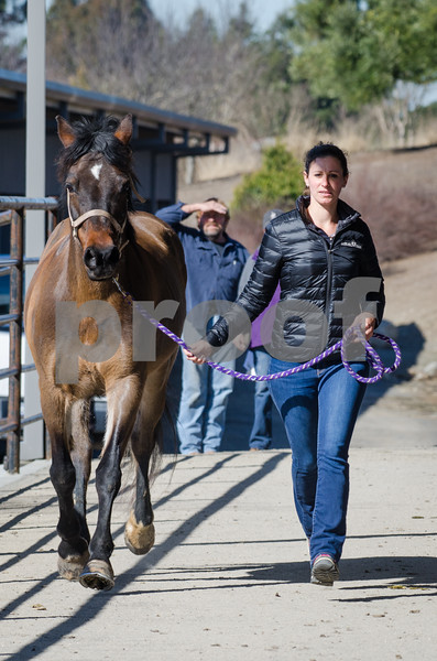 Equinology Course at Circle Oak Equine 1.30.2017