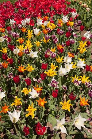 Spring Bulbs @ Longwood Gardens