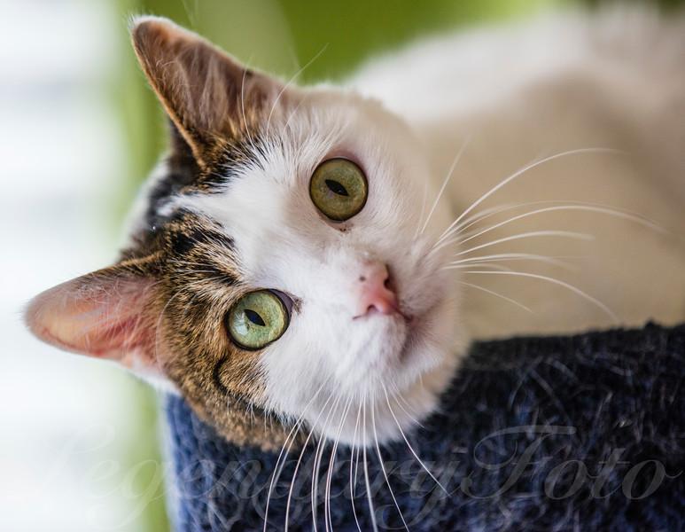 Cats_Lamborghini_4.jpg
