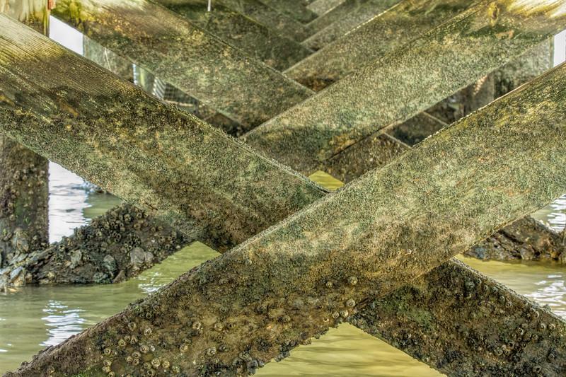 Algae-.jpg