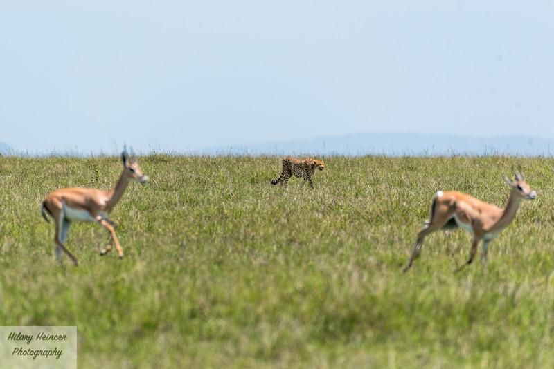 Kenya Wildlife-57.jpg