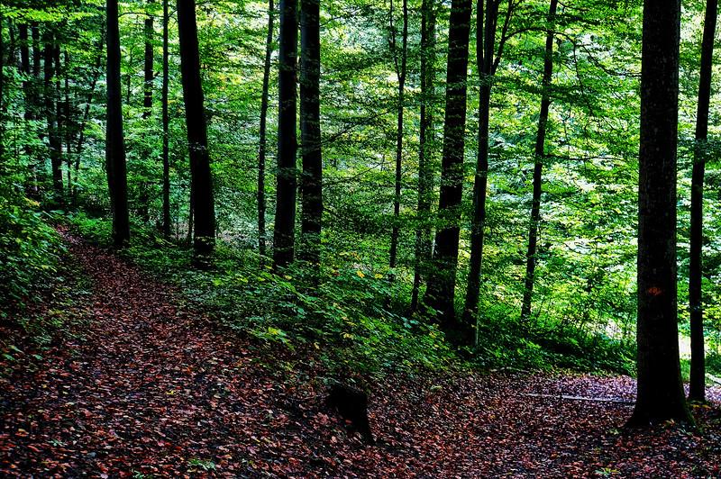 Wald | Forest, Sellenbüren