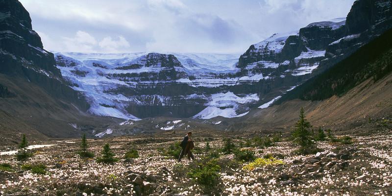 Hiker & Stutfield glacier, Jasper national park