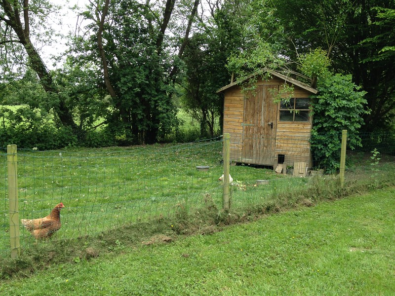 Chicken coop and chickens.