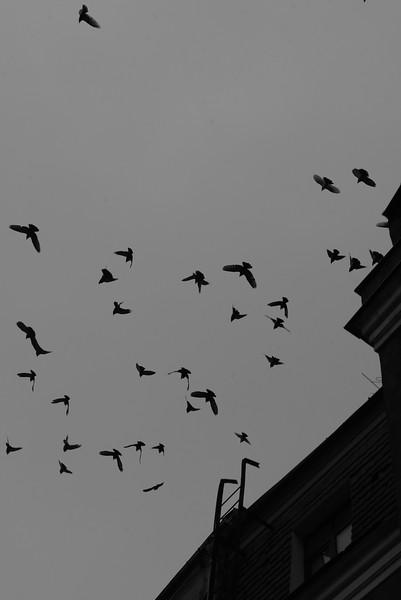 Nijole Shuberg Photography.jpg