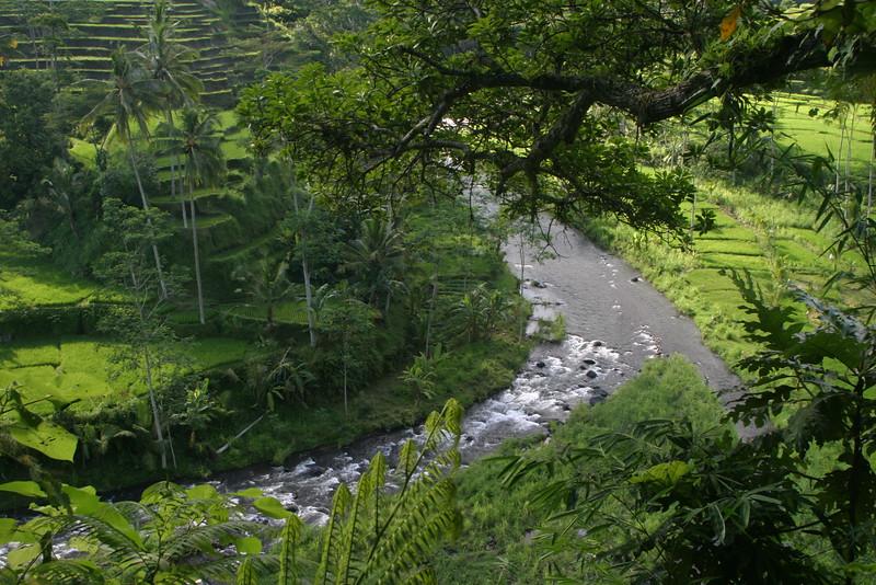 IN630-Bali rice fields.JPG