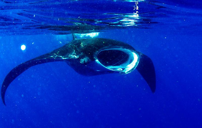 2014 Whale Shark - Cave Adventure-61.jpg
