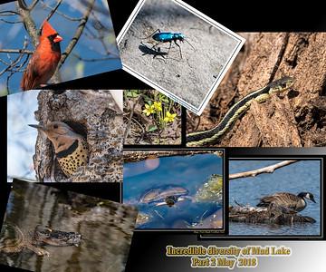 Scenes of Mud Lake_Hilda_rd & Other Ottawa Nature Sites