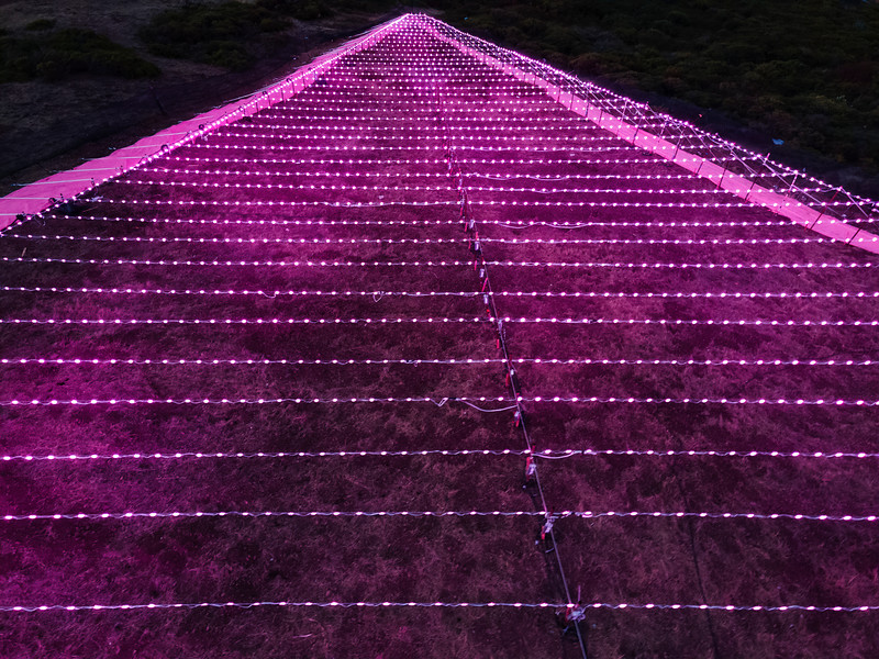 pink triangle quarantine 1331177-10-20.jpg