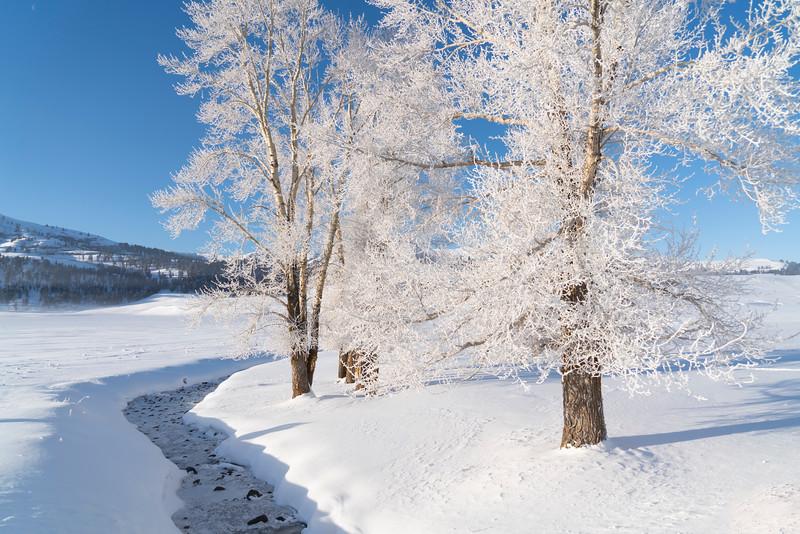 _AR71062 Lamar 2 frosted trees by creek.jpg