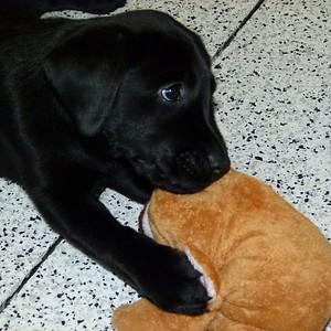Southeast Guide Dog training