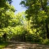 Crossing Walnut Creek on a summer day-1140126