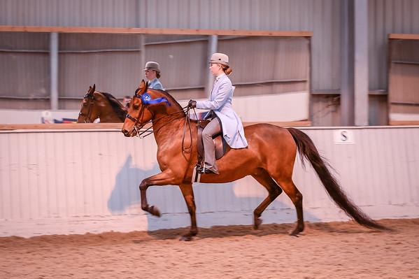 Class 24 (Morgan Classic Pleasure Saddle)